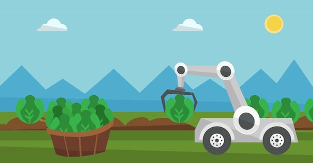Robot che raccoglie cavolo al campo agricolo.
