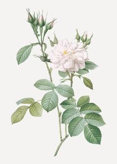 Rosa autunnale in fiore