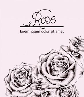 Rose d'epoca