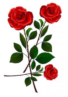 Rose rosse realistiche isolate su bianco.