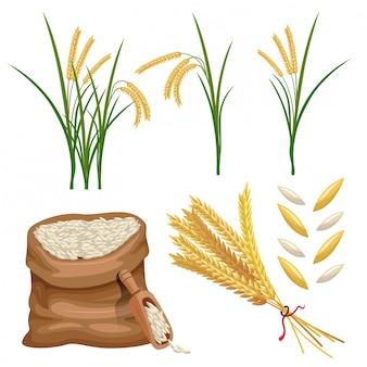 Sacco di paddy orecchie e riso set vettoriale