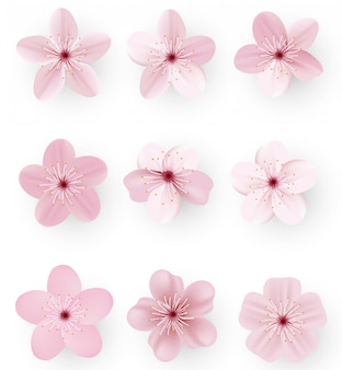 Sakura o fiori di ciliegio