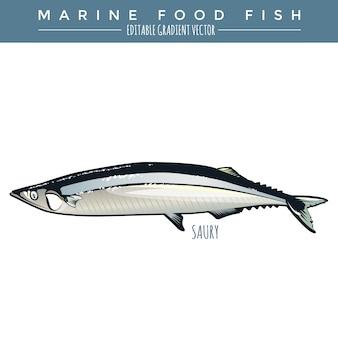 Saury. pesci marini