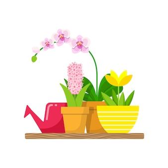 Scaffale con piante domestiche e un annaffiatoio per fiori. orchidea phalaenopsis, loto giallo e giacinto rosa.
