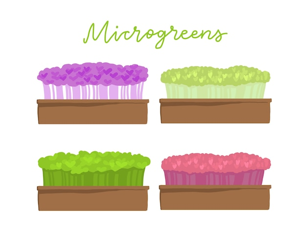 Scatola microgreens. diversi tipi di superfood.