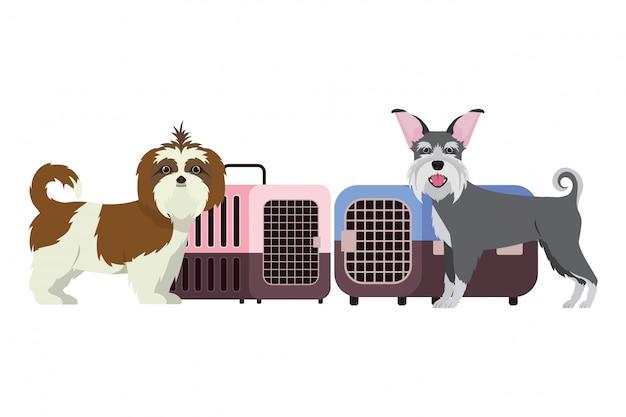 Scatole di trasporto dell'animale domestico e dei cani su bianco