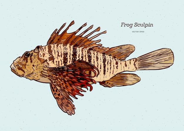 Scazzone di steller (myoxocephalus stelleri), noto anche come scorfano di rana, schizzo di disegno a mano.