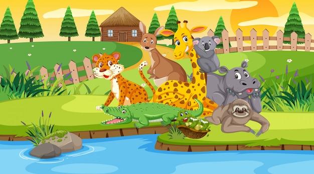 Scena con animali selvatici nel campo sul fiume al tramonto