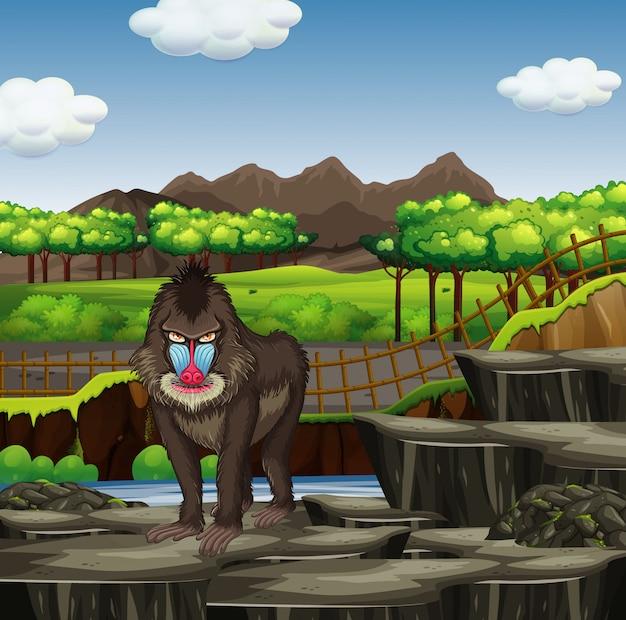 Scena con babbuino nello zoo