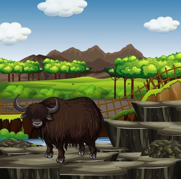 Scena con bufali nella foresta