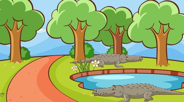 Scena con coccodrilli nel parco