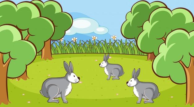 Scena con coniglietti grigi nella foresta