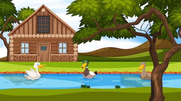 Scena con cottage in legno nel campo e anatre nel fiume