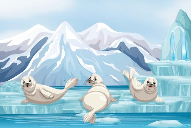 Scena con foche bianche su ghiaccio