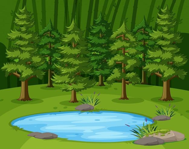 Scena con grandi alberi verdi dallo stagno