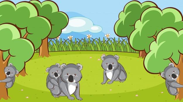 Scena con koala in giardino