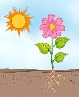 Scena con la crescita di fiori nel luminoso giorno soleggiato