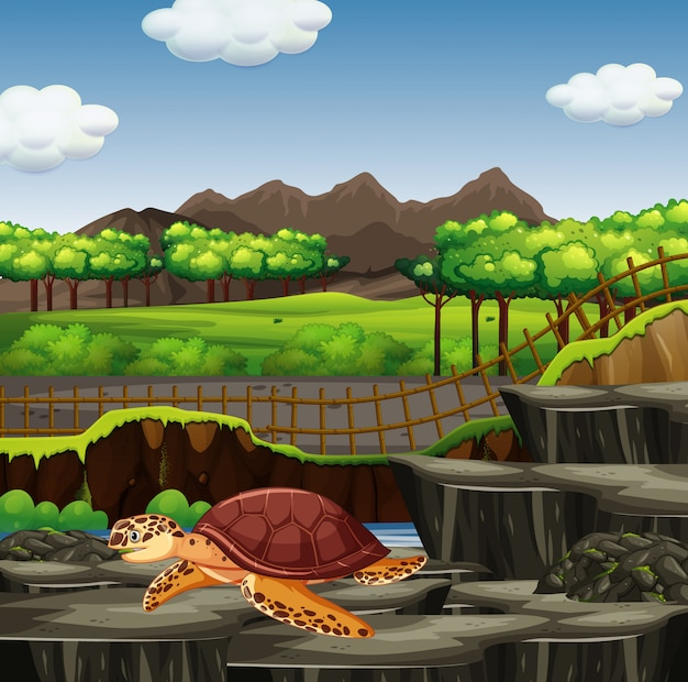 Scena con la tartaruga di mare nello zoo
