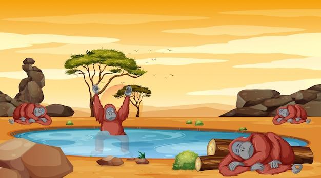 Scena con lo scimpanzè nell'illustrazione dello stagno