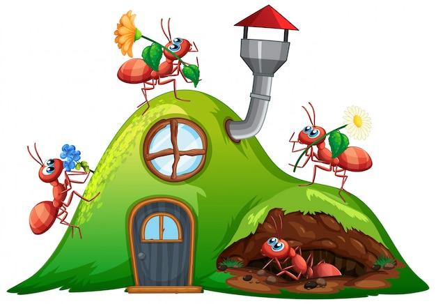Scena con molte formiche sulla casa di collina