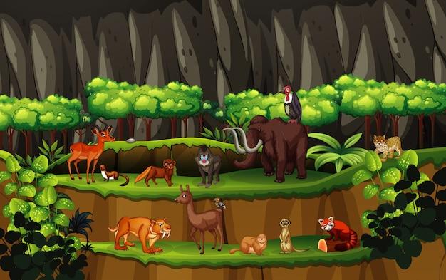 Scena con molti animali nella foresta