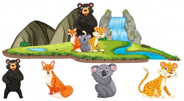 Scena con molti animali selvatici dalla cascata su sfondo bianco