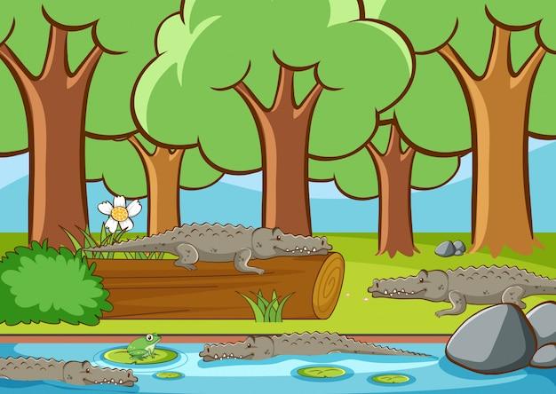 Scena con molti coccodrilli nella foresta