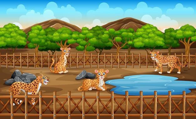 Scena con molti leopardi nella gabbia aperta del parco dello zoo sulla natura