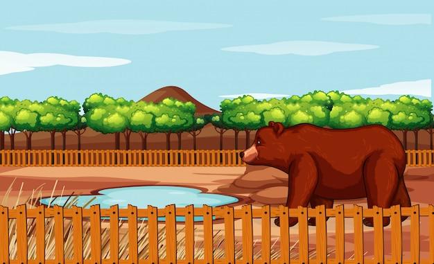 Scena con orso grizzly nello zoo