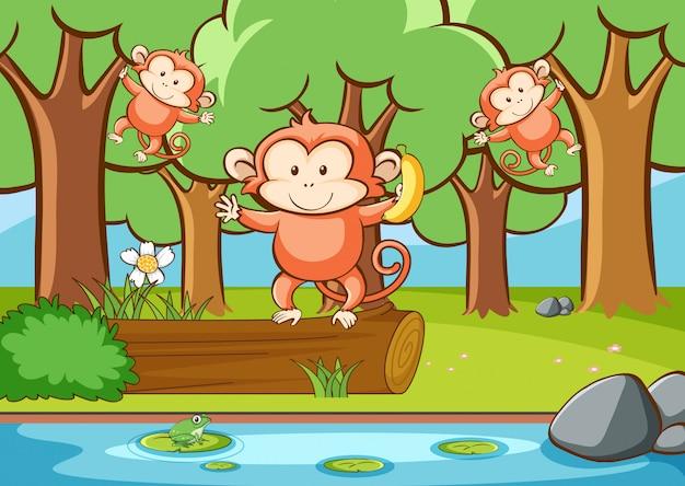 Scena con scimmie nella foresta
