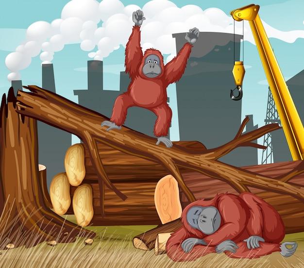 Scena con scimpanzé e deforestazione