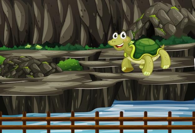 Scena con tartaruga allo zoo