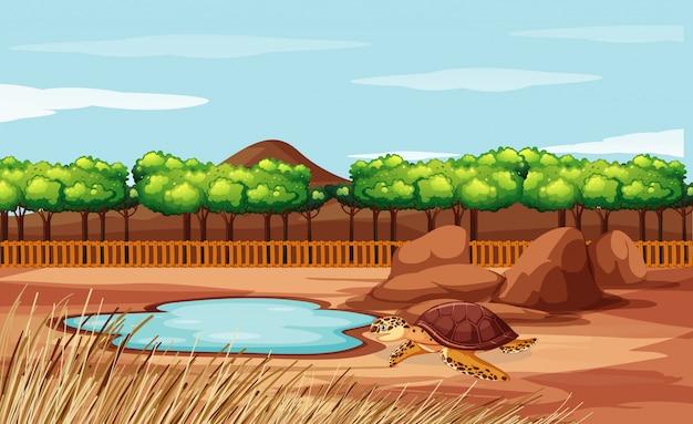 Scena con tartaruga nello zoo