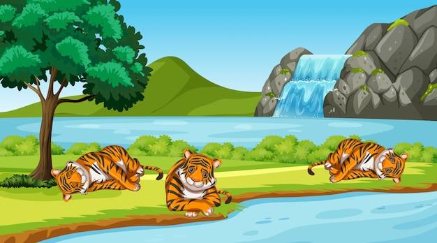 Scena con tigri selvatiche nel parco