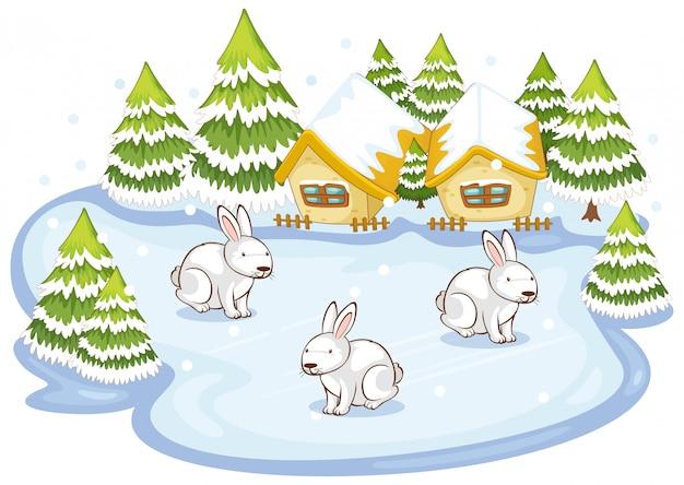 Scena con tre conigli nel campo di neve