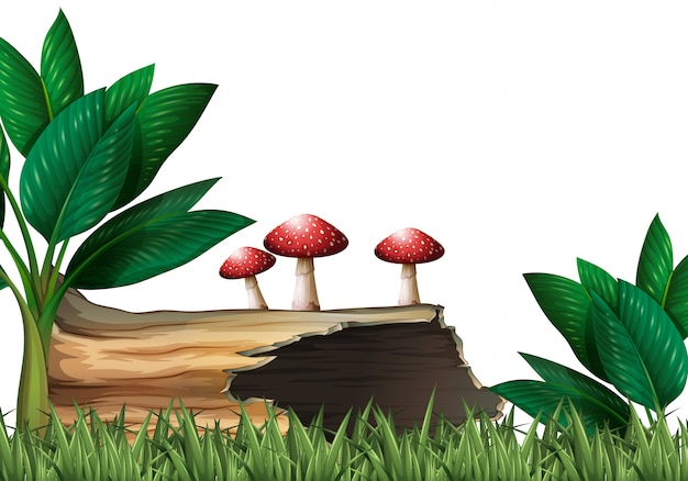 Scena del giardino con ceppo e funghi