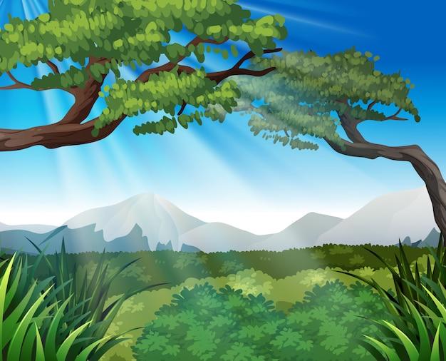 Scena della natura con alberi sulle montagne