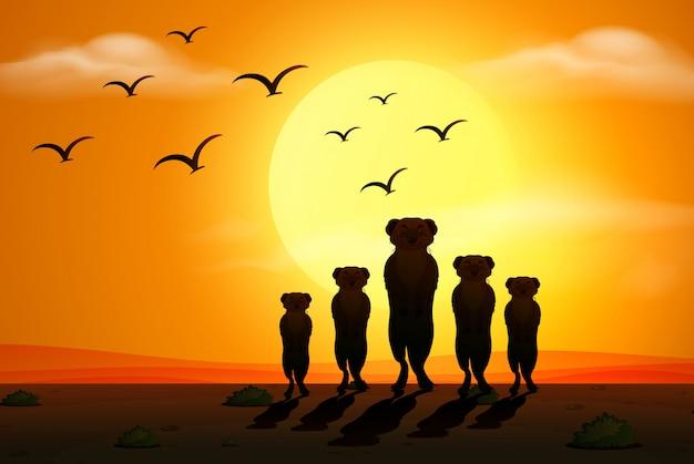 Scena della siluetta con i meerkats al tramonto