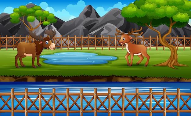 Scena dello zoo con un'alce e un cervo che giocano nella gabbia aperta