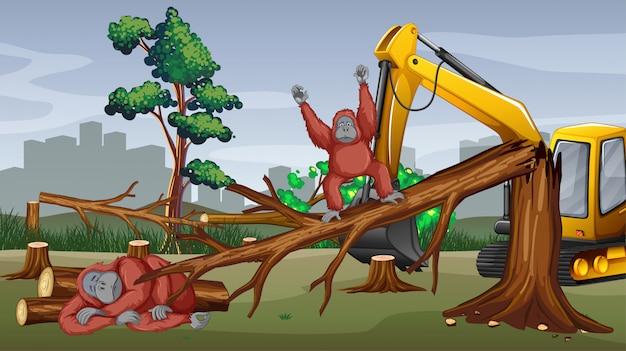 Scena di deforestazione con alberi da taglio trattore
