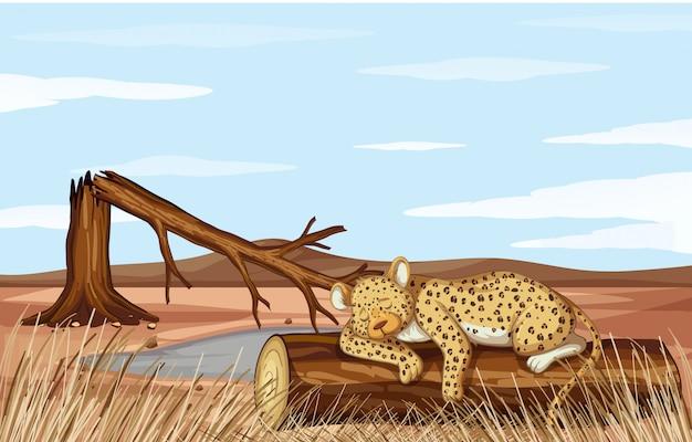 Scena di deforestazione con il ghepardo morente