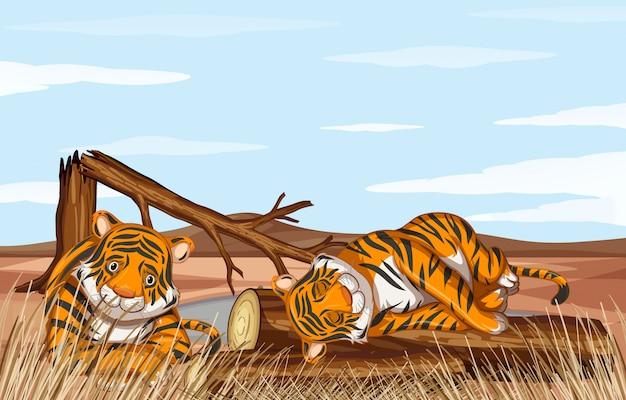 Scena di deforestazione con tigri deboli