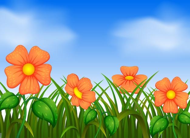 Scena di sfondo con fiori in giardino