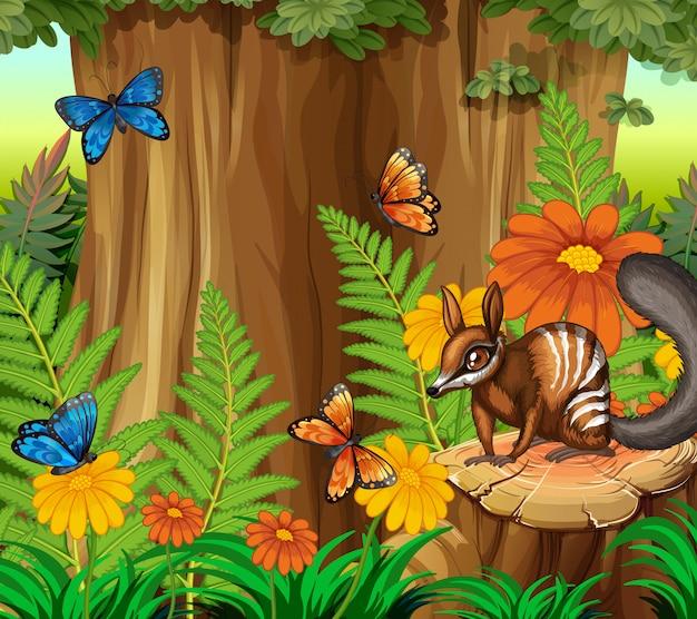 Scena di sfondo con numbat e farfalla nella foresta