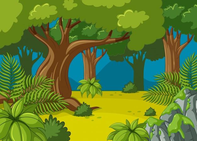 Scena forestale con grandi alberi