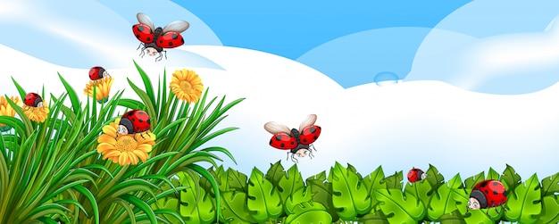 Scena in bianco con le coccinelle nel giardino con alcuni fiori di giorno