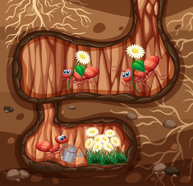 Scena sotterranea con molte formiche e fiori