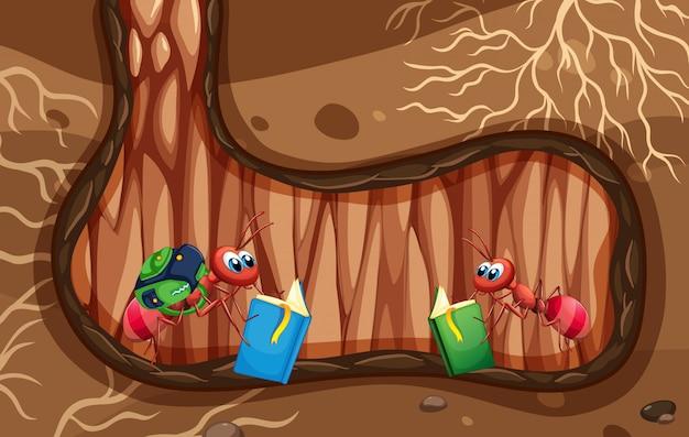 Scena sotterranea con un libro di lettura di due formiche
