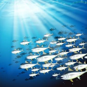 Scena subacquea con scuola di tonno