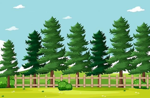 Scenario del parco naturale di sfondo vuoto
